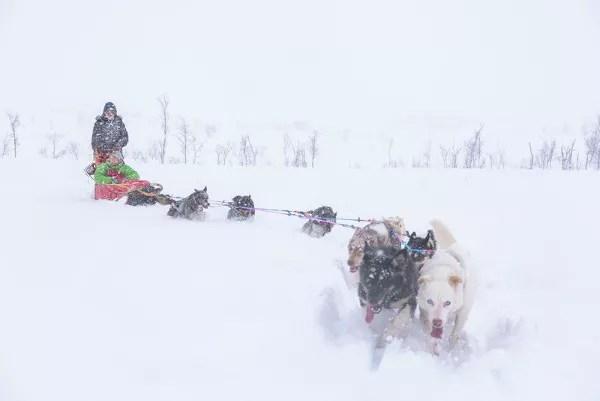 Fotos de Tromso en Laponia Noruega, trineos de perros