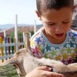 Fotos de Vitoria en Euskadi, Oriol cabra granja