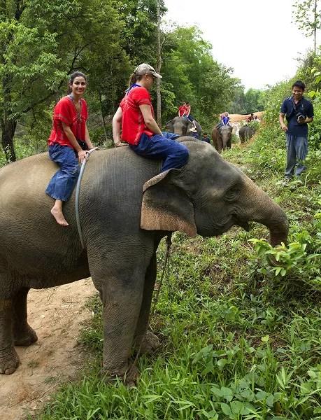 Fotos de viajes a Tailandia con niños y NaaiTravels, elefantes vertical