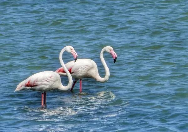 Fotos del Mar Menor en Murcia, flamencos