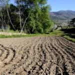 Fotos del Valle del Jerte, Agroturismo El Vallejo Teo y Oriol con la semillas