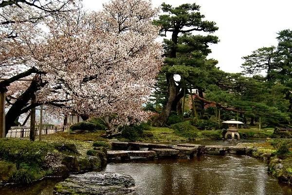 Fotos del Sakura en Kanazawa, Japon