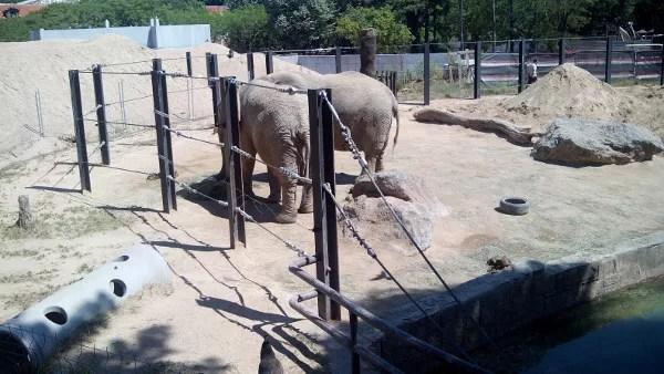 Fotos de Barcelona con niños, zoo elefantes