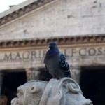 La paloma y el Panteón de Roma