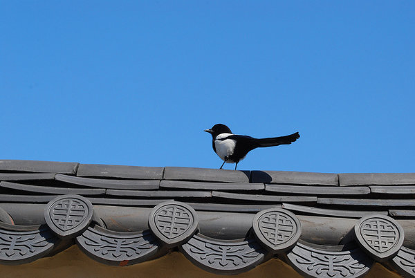 Pájaro en el Palacio Gyeongbokgung de Seúl