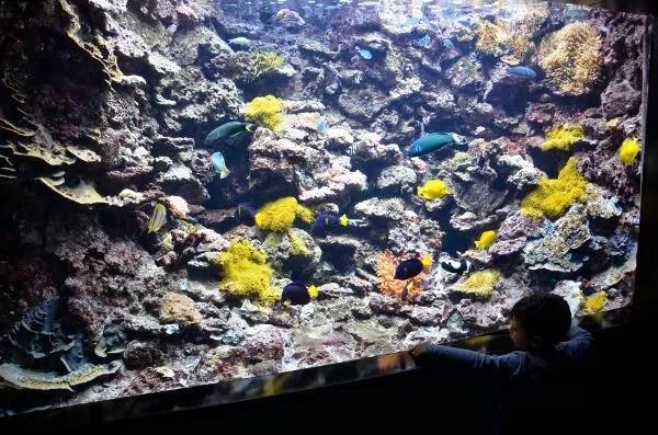 Teo buscando a Nemo en el Acuario de Gijón