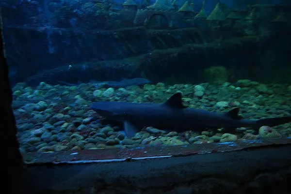 Tiburones en el acuario Tri Nguyen de Nha Trang