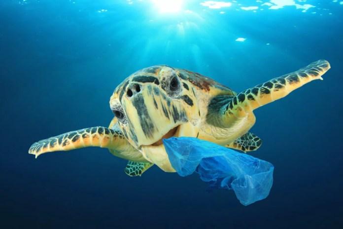 Turismo sostenible, tortuga marina plastico