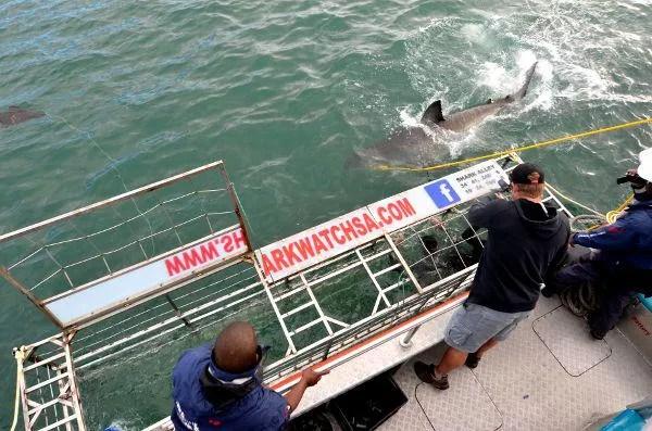 Fotos de bucear con tiburon blanco en Sudafrica, en la jaula