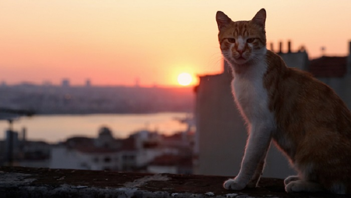 Kedi El Palomitrón
