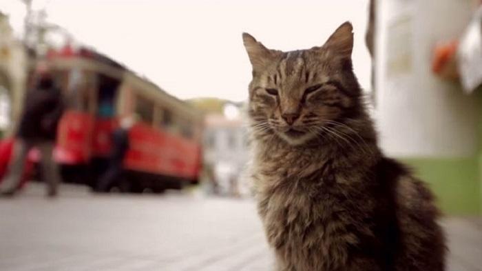 Kedi (Gatos de Estambul) El Palomitrón