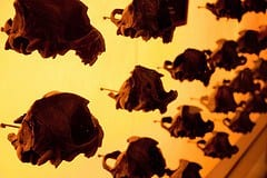 Pequeños esqueletos. Foto: Betty Weber vía Flickr c.c.