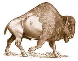 Bisonte antiguo. La Brea Tart Pits.