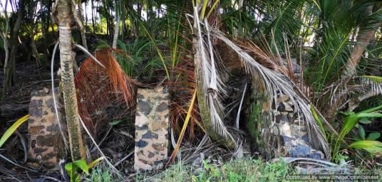 la selva ha devorado parte de los edificios