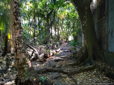 la selva y 70 años...