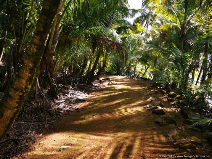 paseo alrededor de la isla