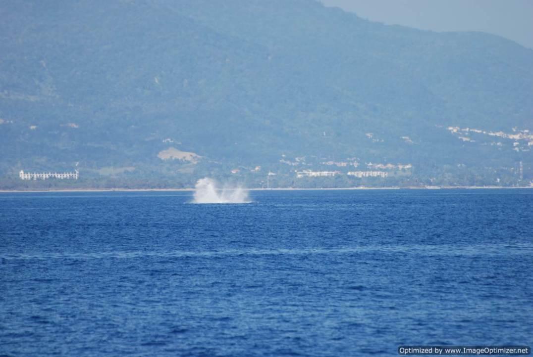 restos de un salto de ballena