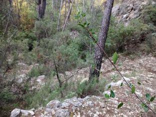 Ramas y más ramas