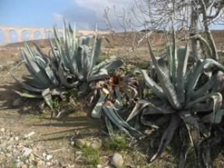 Pitas afectadas Al fondo acueducto de Fernan Pérez
