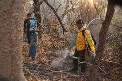 Árboles milenarios, como el Caracolí y el Guáimaro, fueron devorados por el incendio del pasado mes de marzo.