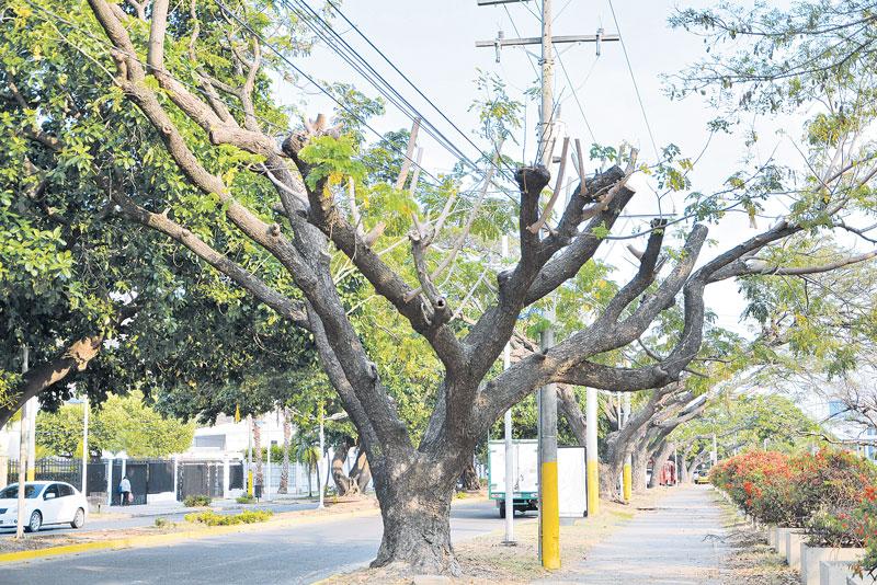 El 40 y 70 % de los árboles se encuentran afectados por plagas y enfermedades.