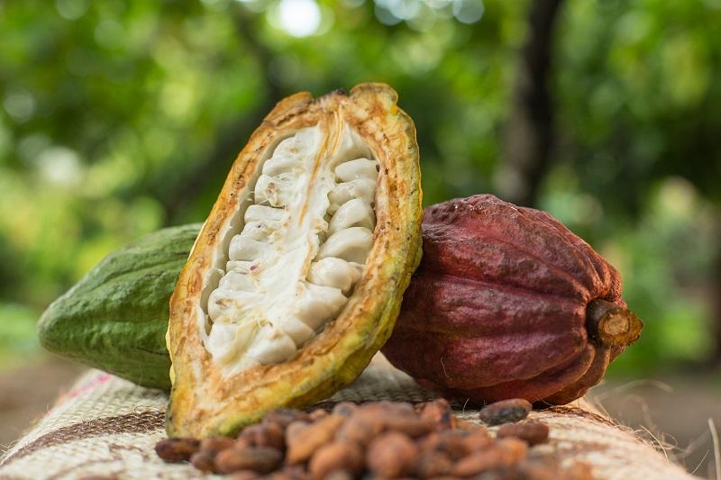 Fincas cacaoteras de Manaure fueron certificadas en buenas prácticas agrícolas - ElPilón.com.co