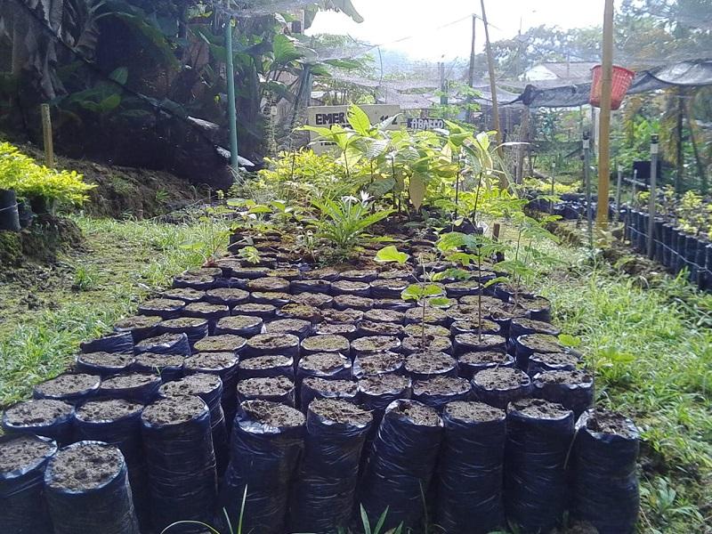 Las visitas del ICA permiten tener un control de enfermedades en las plantas.  FOTO/CORTESÍA.