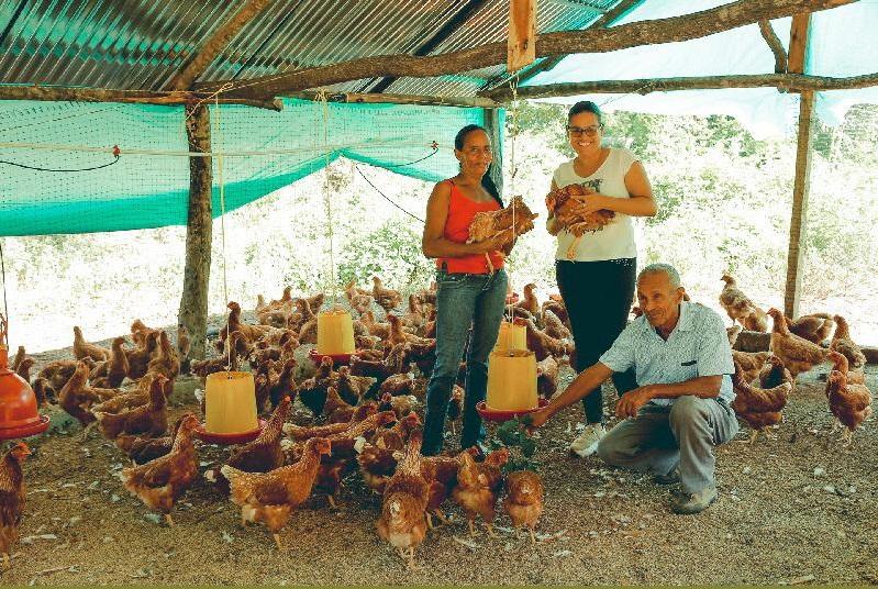 Diferentes proyectos productivos gestiona el PDET  como gallinas ponedoras y cultivos.   Foto: CORTESÍA/EL PILÓN