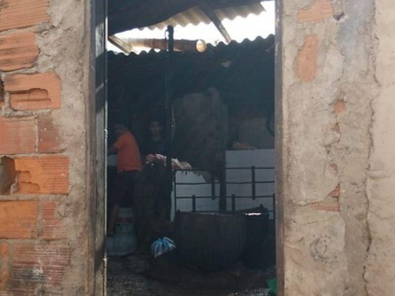 El matadero clandestino de cerdo está ubicado en el barrio Cinco de Enero.   FOTO/CORTESÍA.