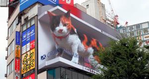 Gato Tokio 2020 (2)