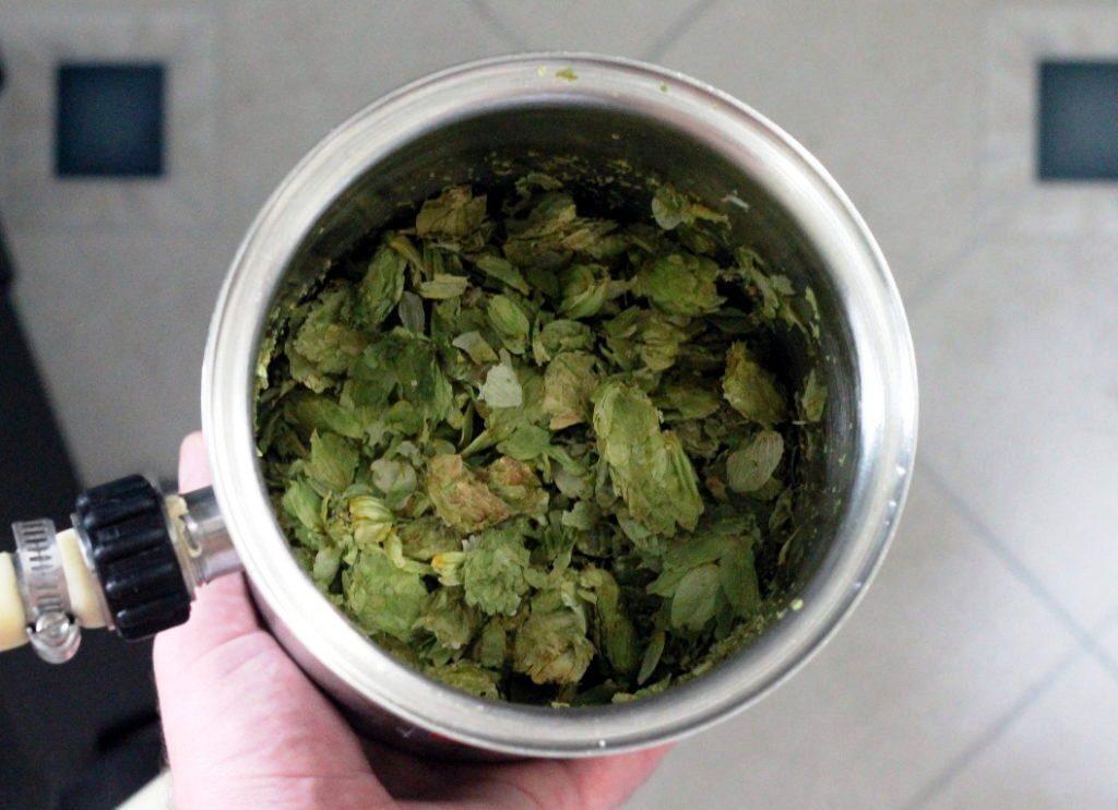 Dry-Hopping-lupulo-lupulina-sabor-de-cerveza-El-Portal-del-Chacinado