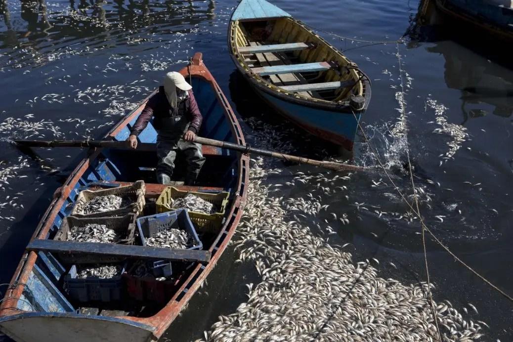 Industria salmonera arruina a isla de Chiloé