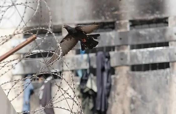 Tragedia en la cárcel de San Miguel en el 2010: Privados de libertad, no de dignidad