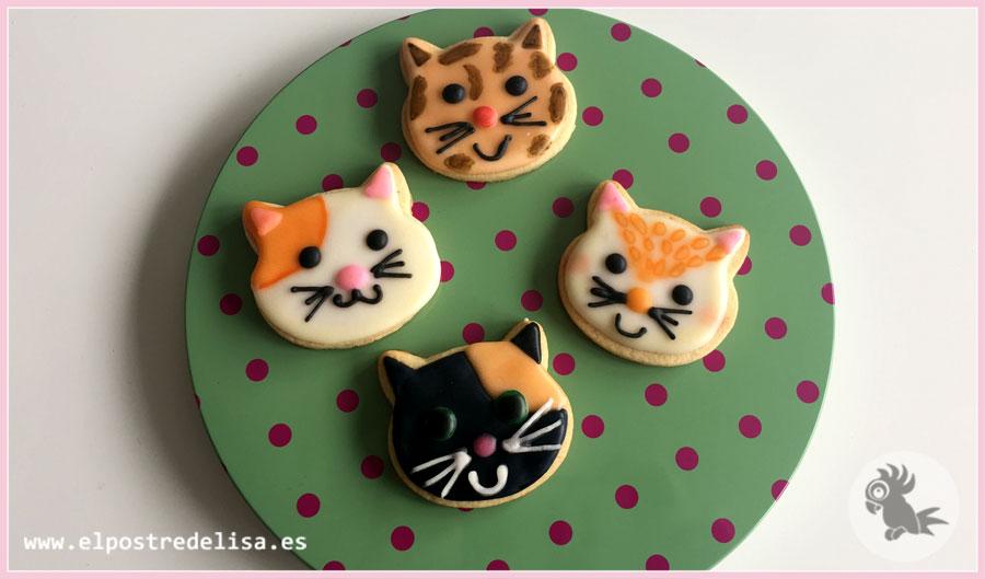 gatos-5