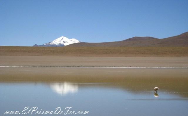 Laguna Hedionda en el Salar de Uyuni - Bolivia