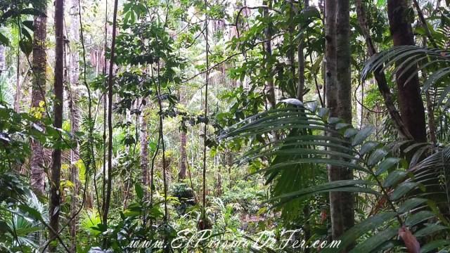 La selva en su máxima expresión