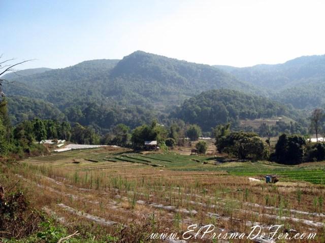 Campos en el Parque Doi Inthanon