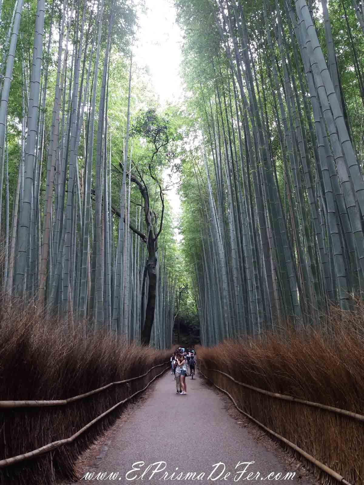 Bosque de Bambu en Arashiyama, Kyoto
