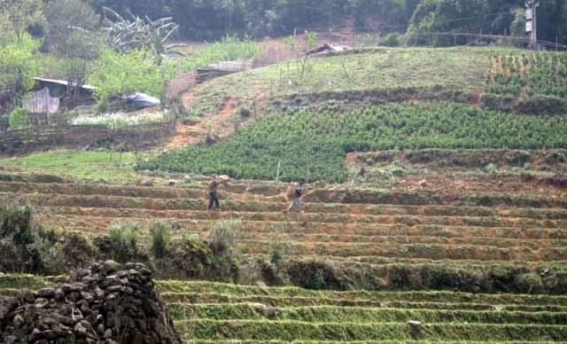 Trabajando en los arrozales