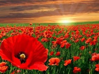 flores, paisaje, atardecer, eclesiastés