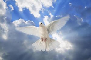 paloma silvestre, espiritu santo, obra