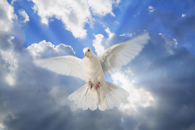 paloma silvestre, espiritu santo