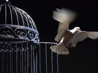 libertad, independencia, paloma