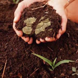 sembrar, semilla, agricultor, talentos, donar, dar