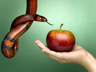 pecador, locura, manzana, culebra