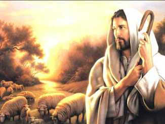 pastor, jesus, cristo, ovejas
