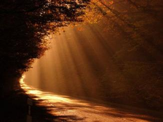 voluntad, Dios, paisaje, luz, bosque