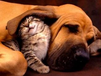tolerancia, gato, perro
