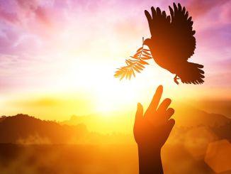 espiritu santo, viviendo