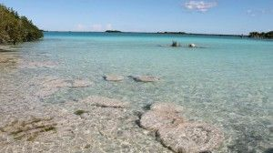 Estromatolitos Laguna de Bacalar